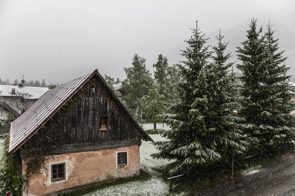 snow storm in late spring in the italian alps valbruna italy